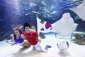 水中でW杯韓国代表を応援