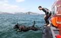 韓国初の水難救助犬目指し