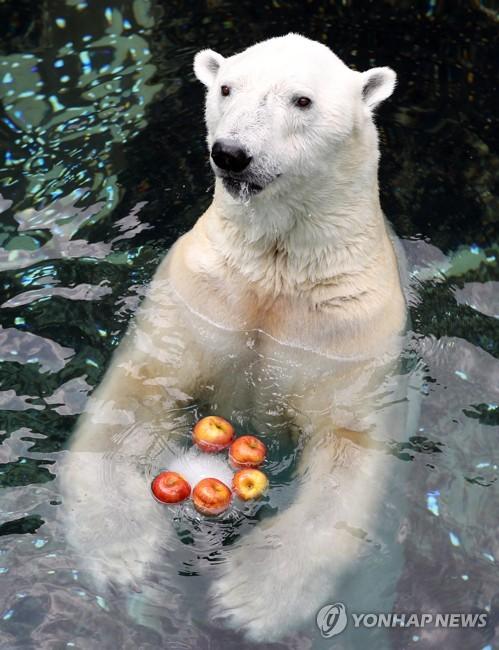 올 6월 한국에서 보내는 마지막 여름…북금곰 '통키'