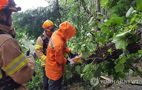 [태풍 비상] 경남서 강풍에 외벽 떨어지고 나무 쓰러져…인명피해는 없어