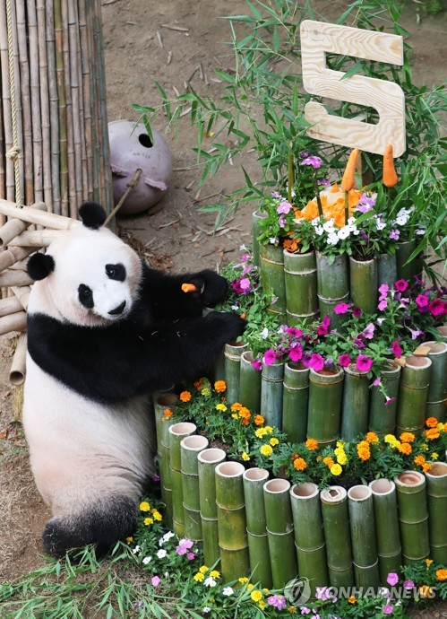 """熊猫""""爱宝""""庆生"""