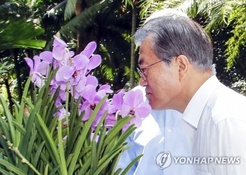 """7月12日,在新加坡植物园,文在寅在感受""""文在寅-金正淑兰花""""的淡雅花香。(韩联社)"""