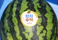 Watermelon with political message