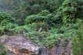 Chèvre des montagne d'Asie
