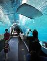 涼しい水族館で楽しいひと時