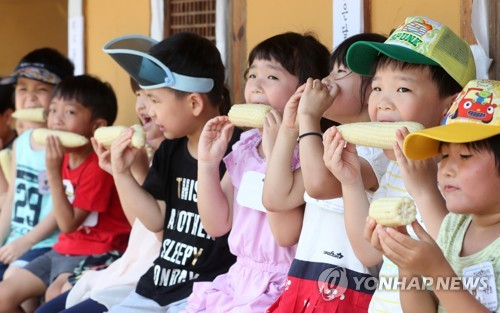 홍천 찰옥수수축제 폐막…폭염 속 20만개 판매 수확