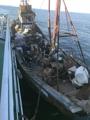 Pesca ilegal de barcos chinos