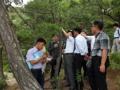 Etude forestière intercoréenne
