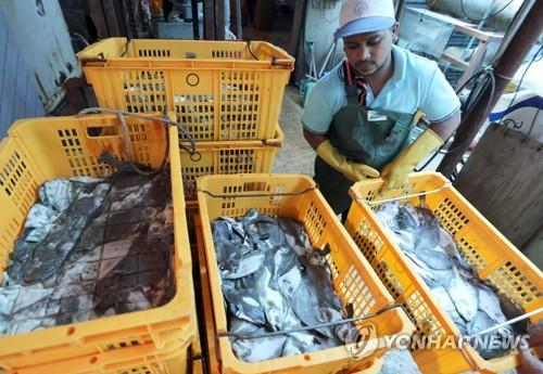 고수온 물고기 떼죽음 속출