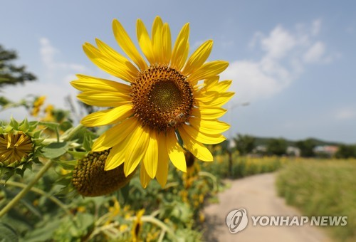 울산 낮 최고 31도…자외선 지수 '나쁨'