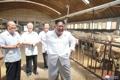 Kim Jong-un inspecciona una granja