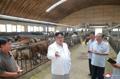 Kim Jong-un visite une ferme