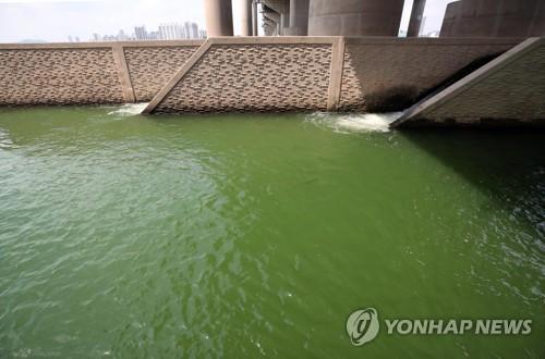 """환경부 """"여름철 녹조에 총력 대응…국민 불안감 해소"""""""