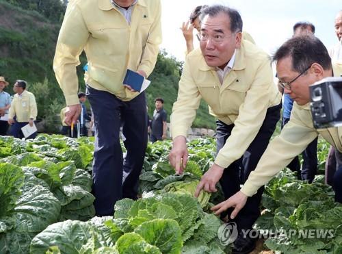 이개호 농식품부 장관, 폭염 속 배추·무 작황 점검