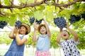 Los niños prueban la cosecha de uvas