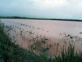 Rizières inondées