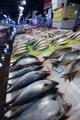 豊漁のサバ 消費減少で苦境に