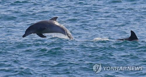 해양관광상품 공모전 최우수상에 '제주 야생돌고래 탐사'