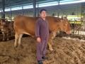 1230キロの大型牛