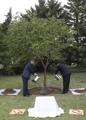 文在寅在朝种下纪念树