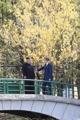 韩朝首脑秋日散步