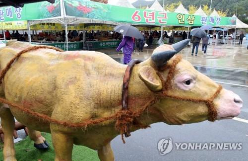 홍천한우·산나물축제 신설…올해 축제 확정