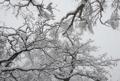 Invierno en Seorak