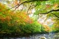 五彩纷呈秋色美