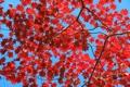 紅葉が見頃の漢拏山