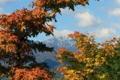 Entre el otoño e invierno