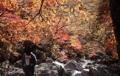 Autumn on Mount Jiri