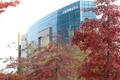 Feuilles d'automne à Kaesong