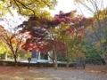 Feuilles d'automne au mont Gyeryong