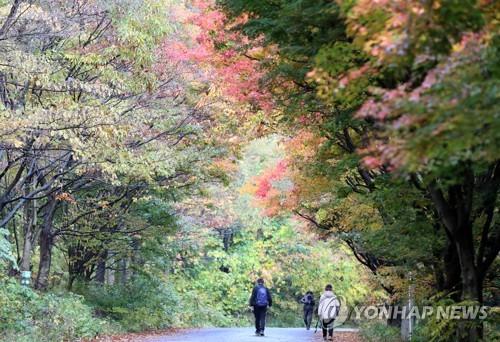 무등산에 찾아온 가을