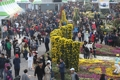 Festival du chrysanthème