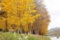 Paseando en otoño