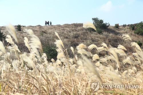 낙엽 품은 가을 끝자락 즐긴다…전국 유명산·관광지 행락 인파