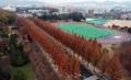 秋色のキャンパス