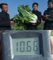 北朝鮮の新品種