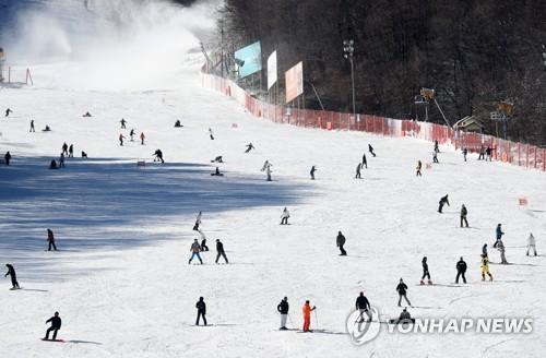 [주말 N 여행] 강원권: 드디어 왔다…스키장 문 활짝 은빛 슬로프 짜릿 질주