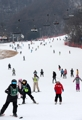 Skiers racing down slopes