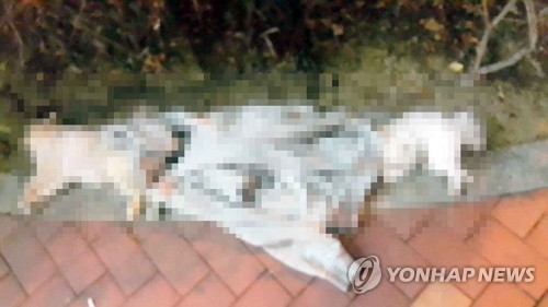 고층 오피스텔서 강아지 3마리 던진 20대 체포