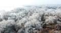 雾凇美景靓丽如画