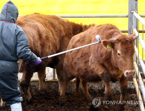 S. Korea lifts restriction on movement of animals over FMD outbreak