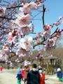 春の兆しを告げる梅