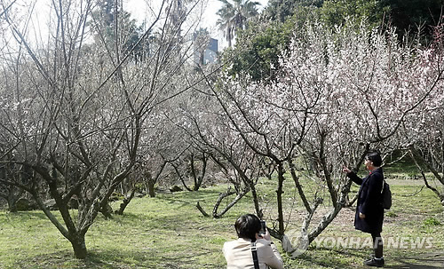 매화 꽃망울이 '톡톡'…성큼 다가온 봄맞이 나선 나들이객 북적