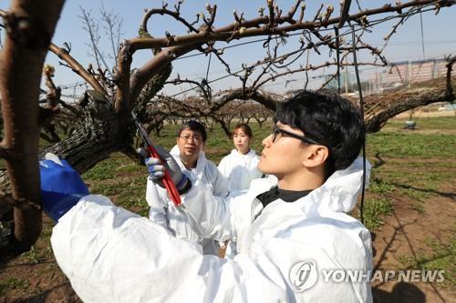 기승부리는 과수 화상병…충북 사과산업 위상 '흔들'(종합)