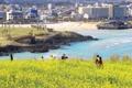 La primavera en Jeju