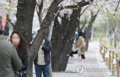 """""""벚꽃놀이는 내년에"""" 주말 여의도한강.."""