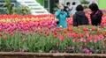 Exposition internationale des fleurs à Goyang